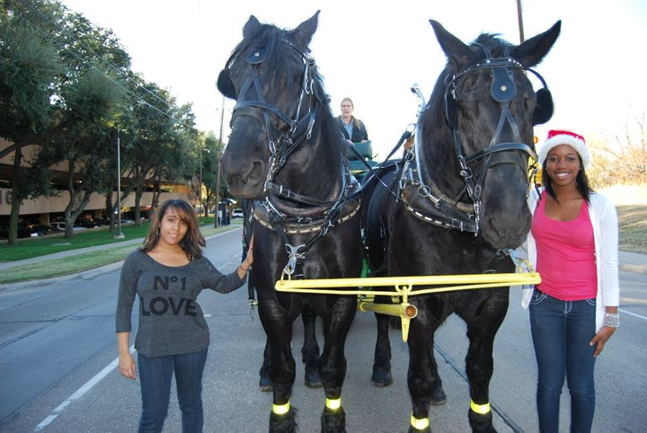 Ashton and Jenny love the Clydesdale horses